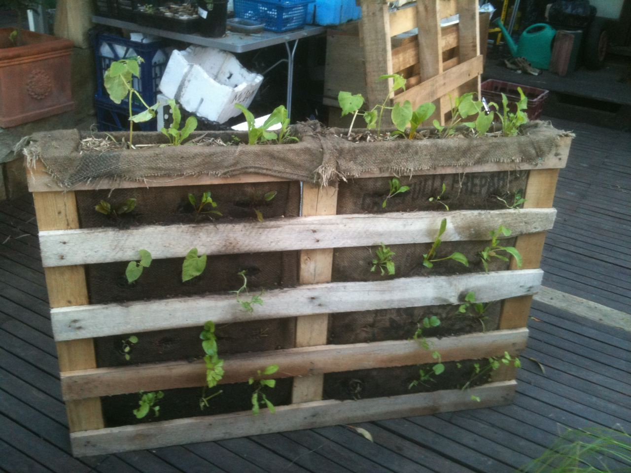 Timber pallet vertical garden with soil in sacks