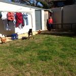 Kelpie herding chooks