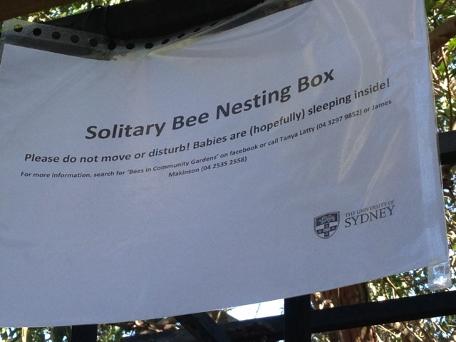 Solitary bee nesting box