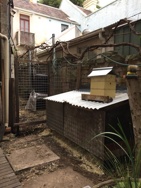 All finished, with stingless bee hive on roof.  Cluck